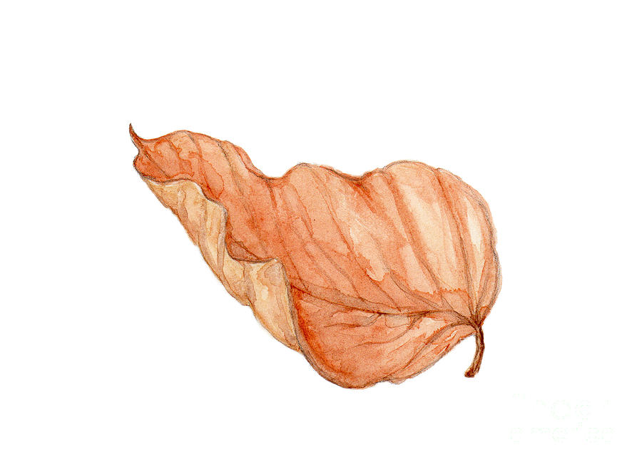 Birch Leaf in Watercolor by Elizabeth Oertel