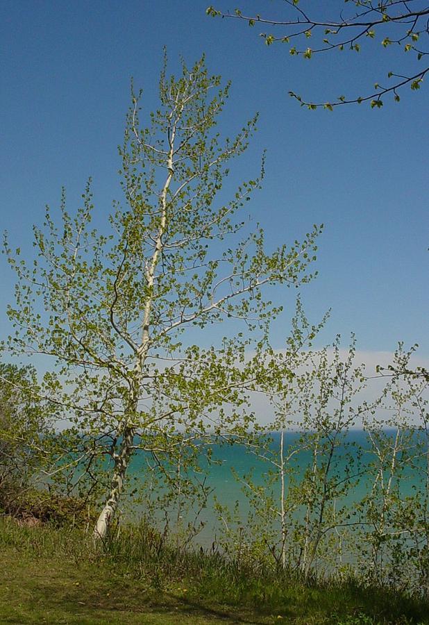 Birch Tree Photograph - Birch Tree Over Lake by Anita Burgermeister