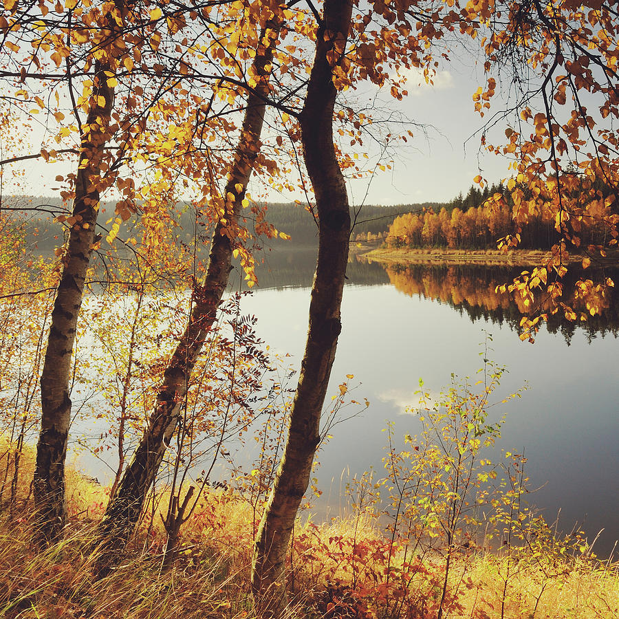 Square Photograph - Birch Trees And Reflected Autumn Colors by Stefan Mendelsohn