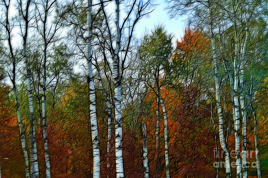 Birch Trees in Autumn by Becky Kurth