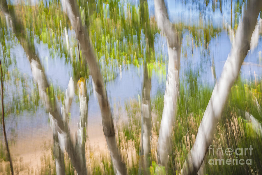 Abstract Photograph - Birch Trees On Lake Shore by Elena Elisseeva