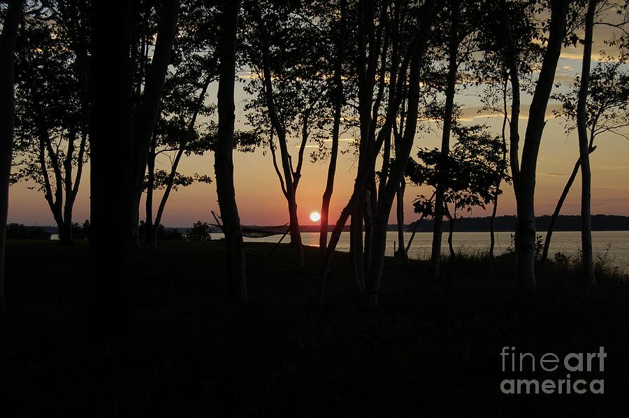 Birch Photograph - Birches Watch The Sunset by Faith Harron Boudreau