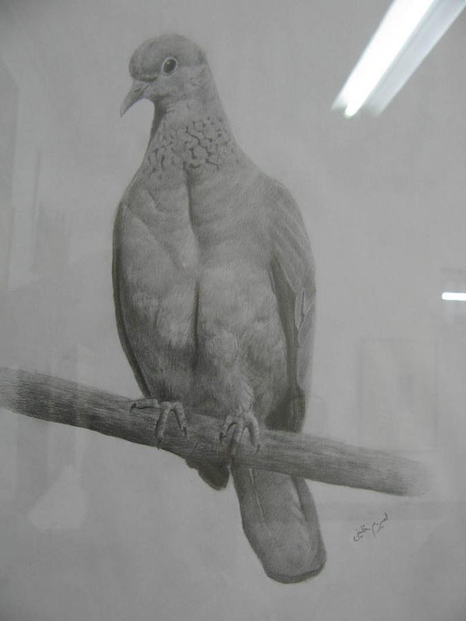 Animal Drawing - Bird by Amir Khalify