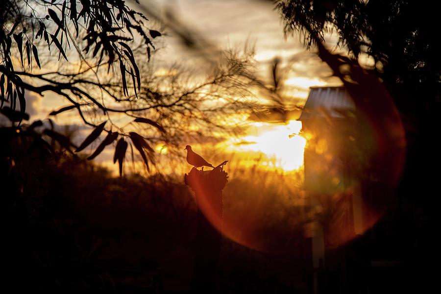 Bird Photograph - Bird At Sunset Color by Fine Art