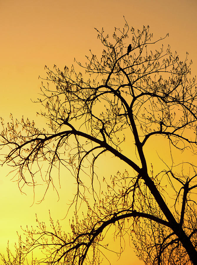 Bird At Sunset Photograph by James Steele