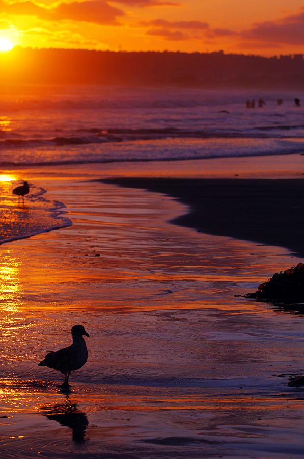 Bird At Sunset Photograph by Jill Reger