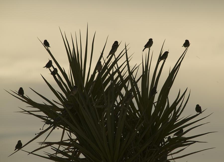 Texas Photograph - Bird Bush by Clyde Replogle