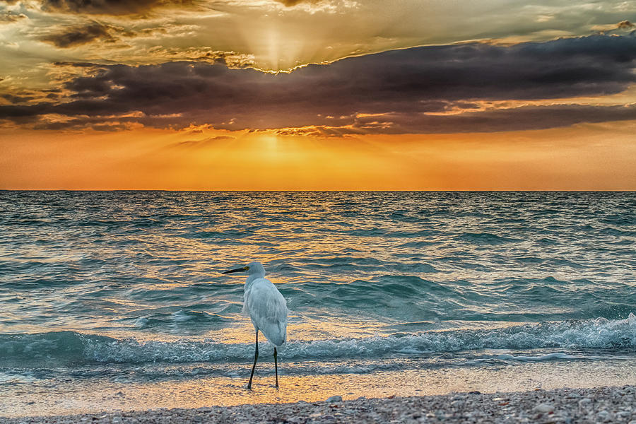Birds Photograph - Bird by the Bay by Don Miller