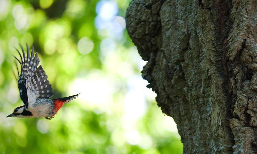 Bird Carpentry  Photograph by Pedro Fuentes