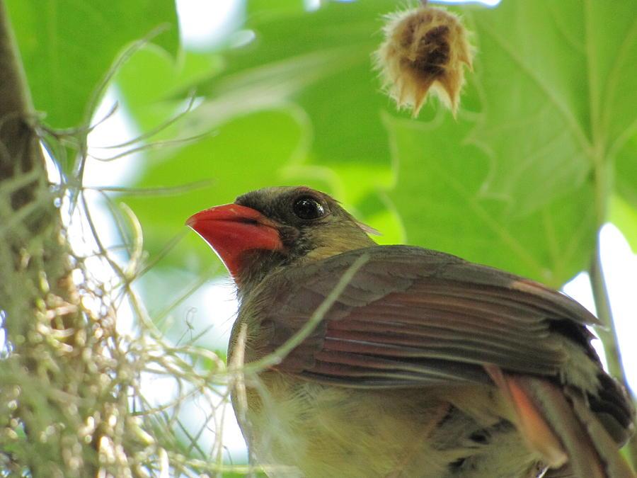 Bird Photograph - Bird Closeup by Jason Moore