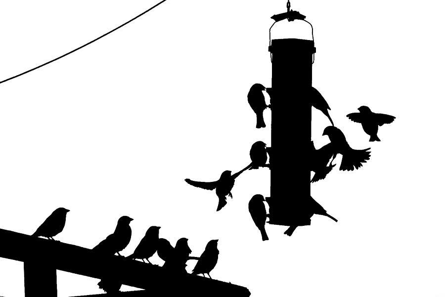 Bird Photograph - Bird Feeder by Andrew Kubica