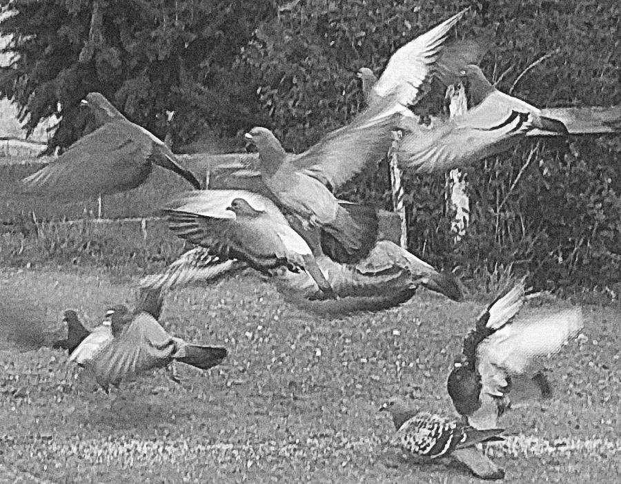 Bird Photograph - Bird Flurry by Suzy Piatt