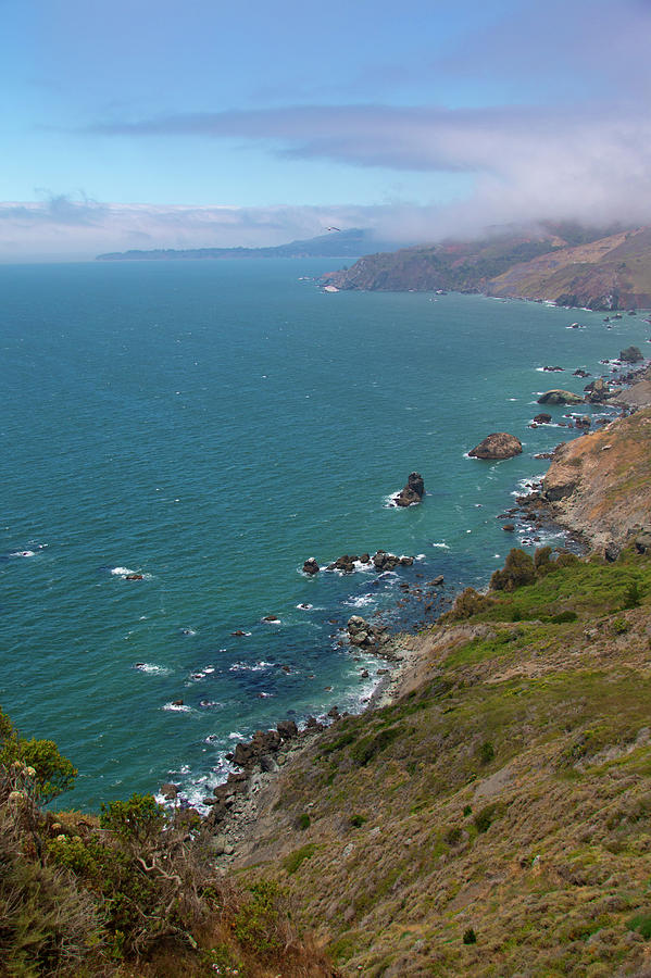 California Coast Photograph - Bird High by Susan Wright