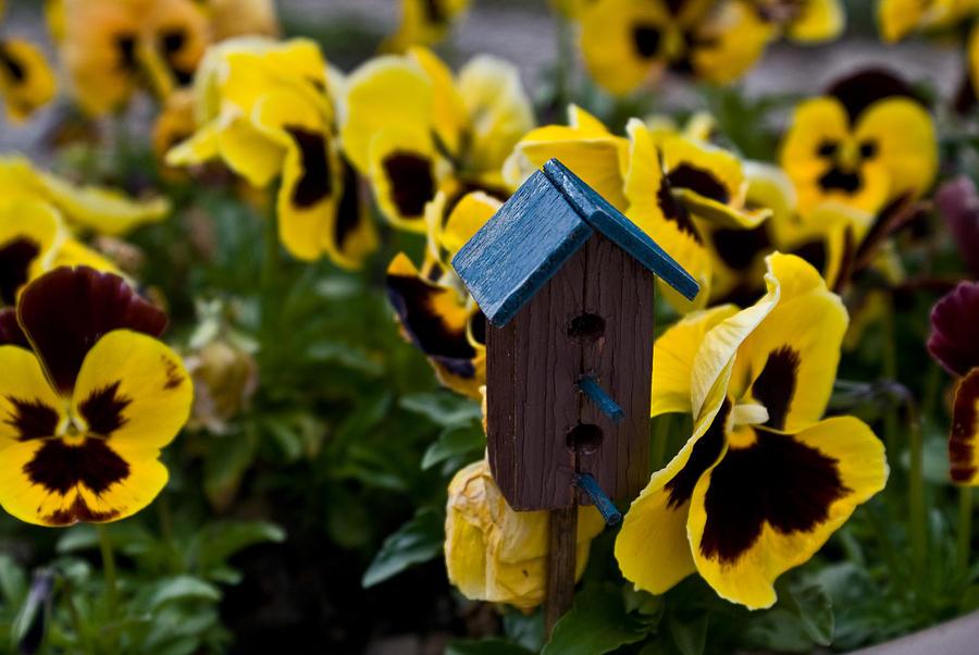 Bird Photograph - Bird House And Pansies by Douglas Barnett