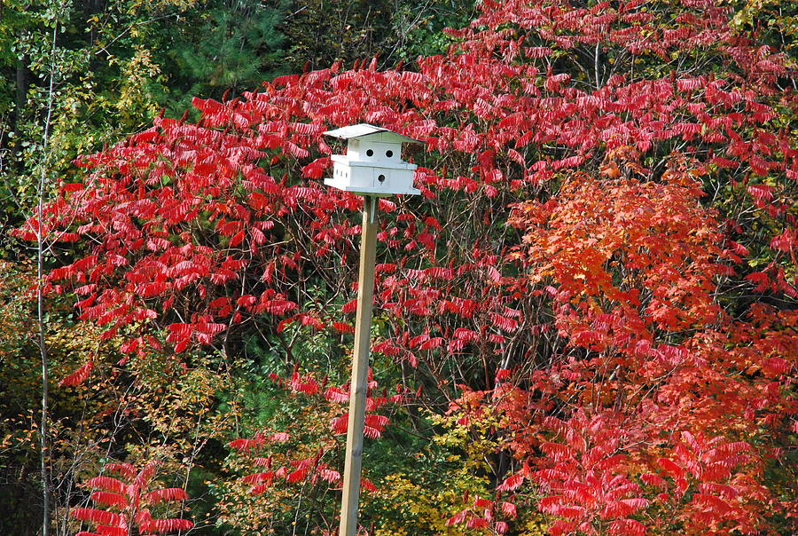 Landscape Photograph - Bird House by Ee Photography
