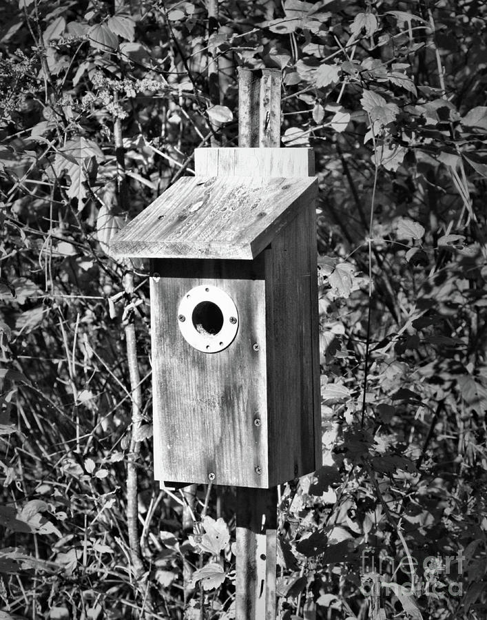 Bird House In Black And White by Smilin Eyes  Treasures