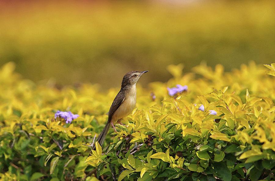 Bird Digital Art - Bird In A Garden by Sandeep Gangadharan