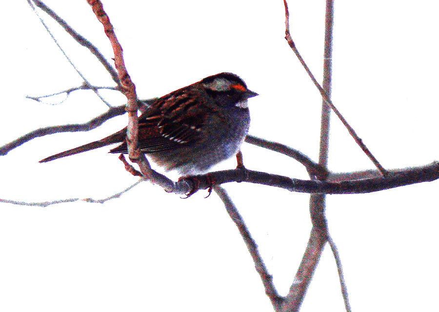 Bird in a winter bush. by Roger Bester