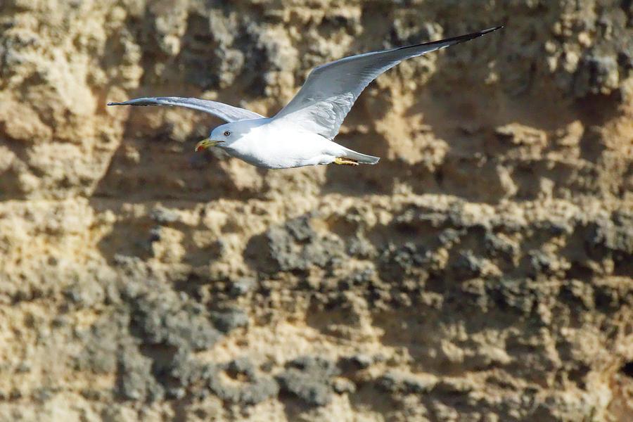 Bird In Flight Photograph