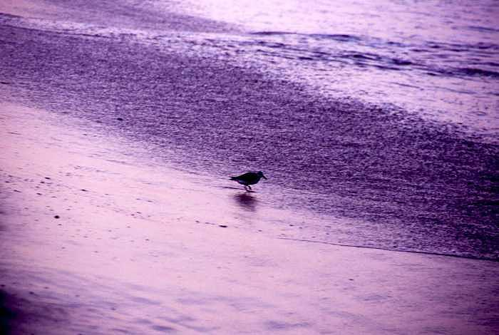 Bird In Sunset Reflection On Beach Photograph by George Ferrell