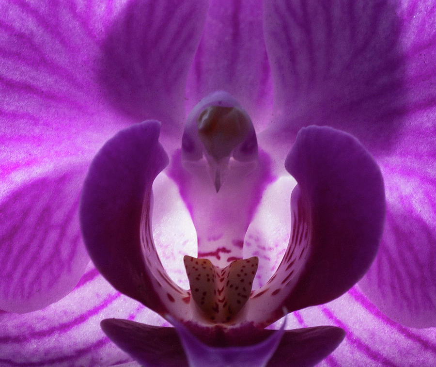 Floral Photograph - Bird In The Orchid by Richard Thomas
