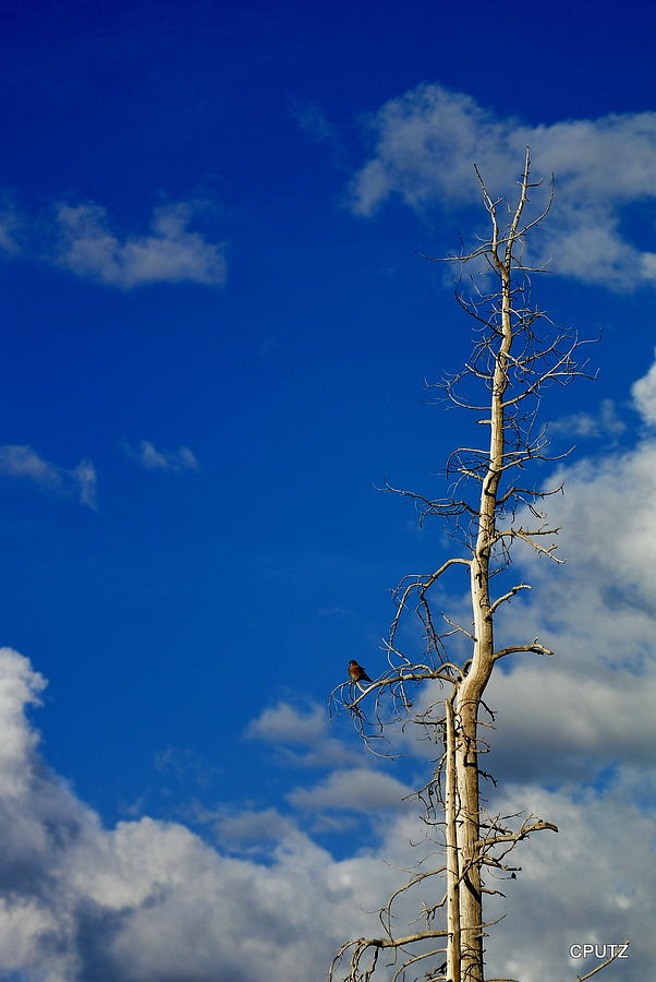Bird Photograph - Bird In Tree by Carrie Putz