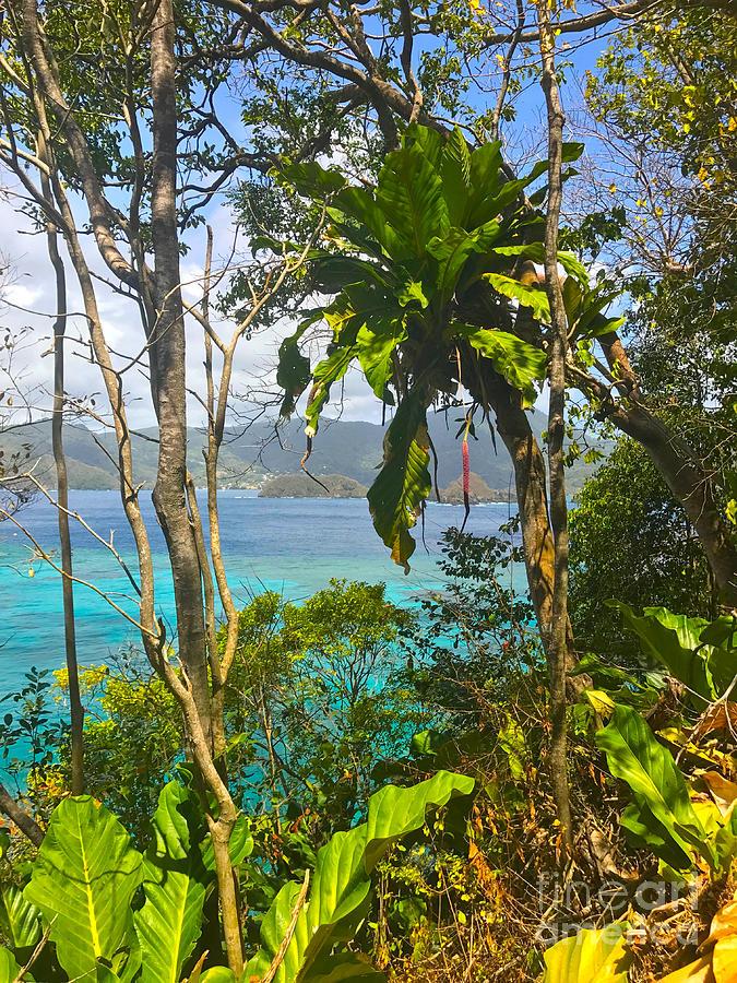 Bird Island Little Tobago Photograph