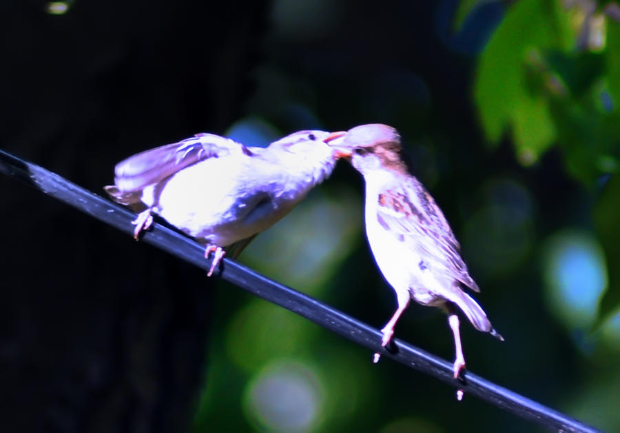 Birds Photograph - Bird Kiss by Bill Cannon