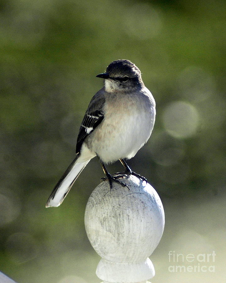 Birds Photograph - Bird by Lynn Reid
