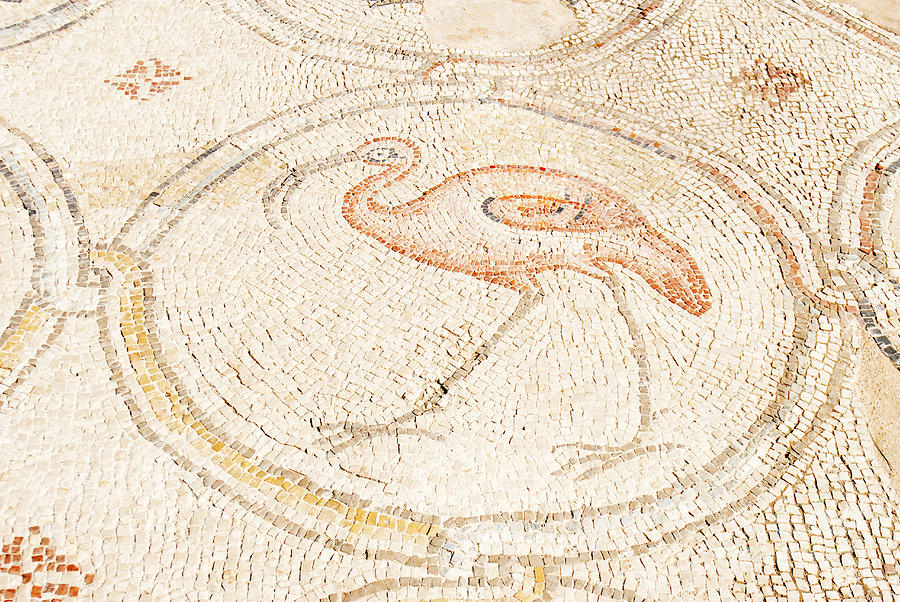 Israel Photograph - Bird Mosaic by Tal Bedrack