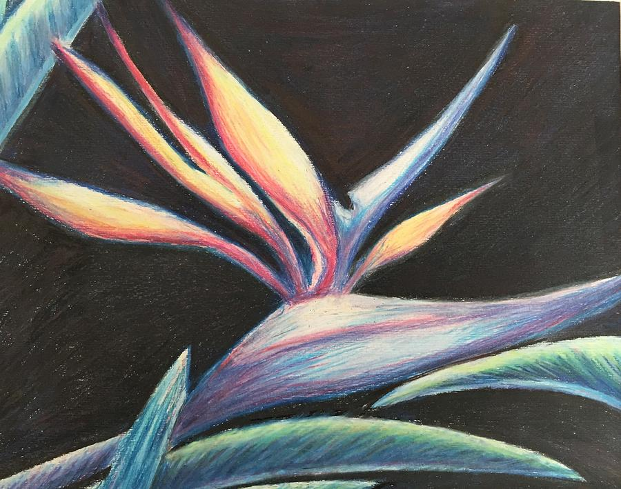 Bird Of Paradise Drawing - Bird Of Paradise by Diane Sleger