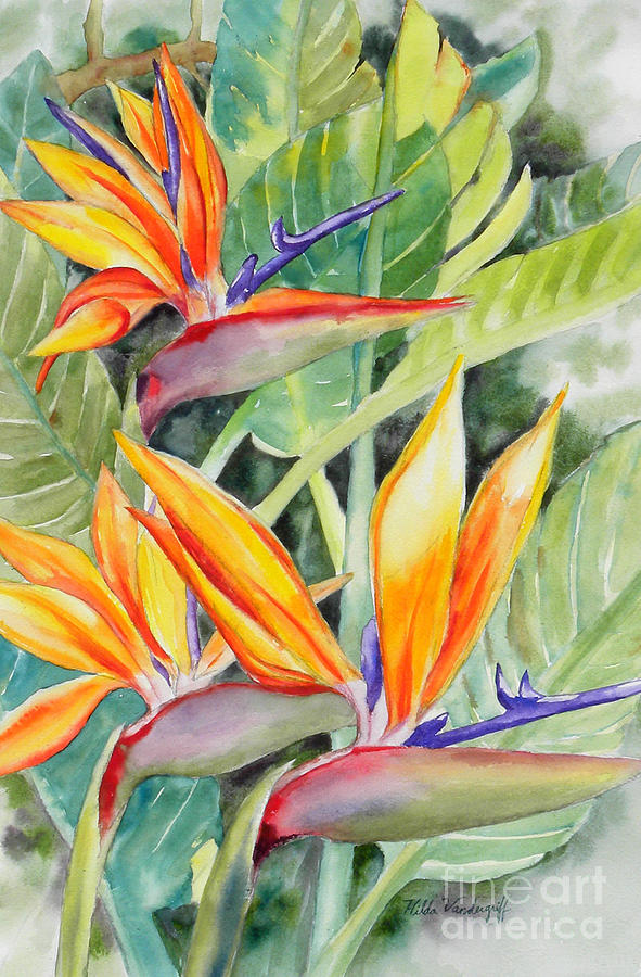 Bird of Paradise Flowers by Hilda Vandergriff