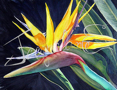Bird Of Paradise Painting - Bird Of Paradise by Jacqueline Endlich