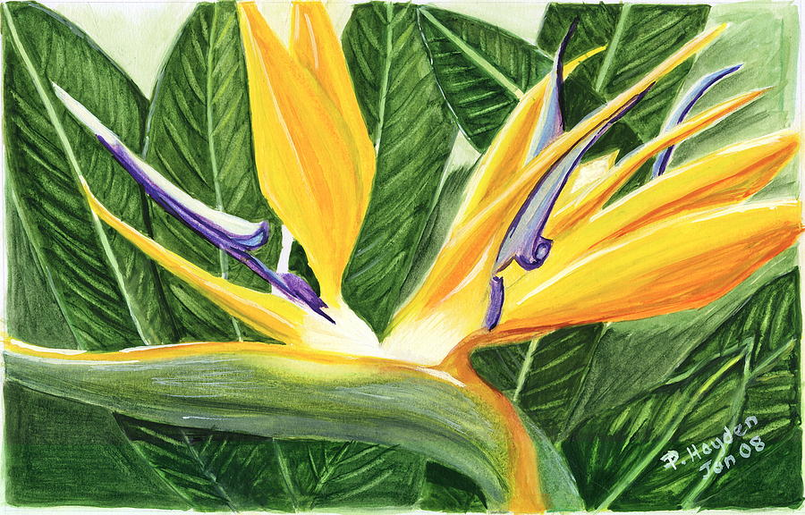 Tropical Flower Painting - Bird Of Paradise by Patricia Hayden