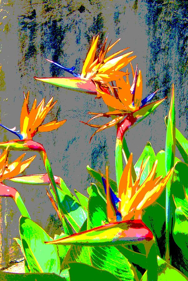 Tropical Painting - Bird Of Paradise by Scott K Wimer