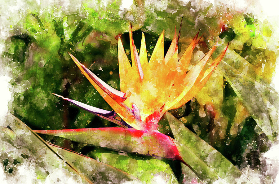 Flower Digital Art - Bird Of Paradise Wc by Peter J Sucy