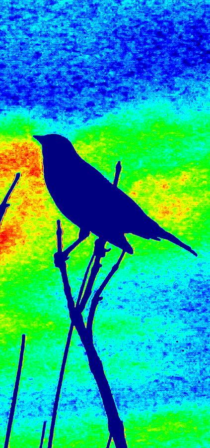 Bird On A Branch by Karen J Shine