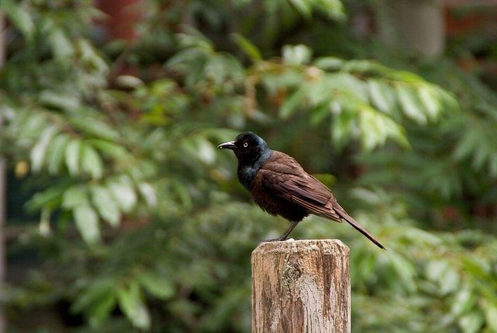 Bird Photograph - Bird on a fence post by Toni Berry
