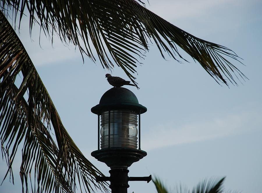 Lamp Post Photograph - Bird On A Light by Rob Hans