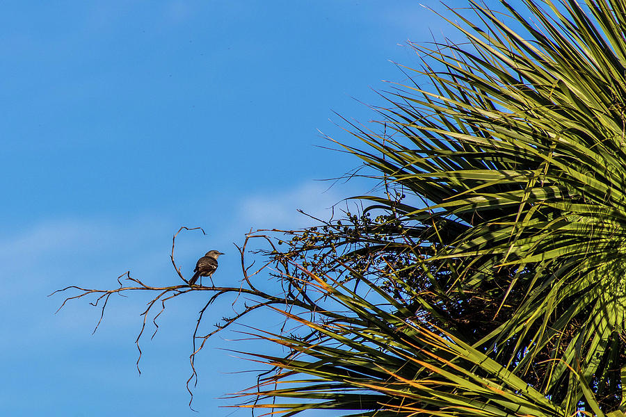 Bird Photograph - Bird On A Palm Branch by Ryan Stoddard