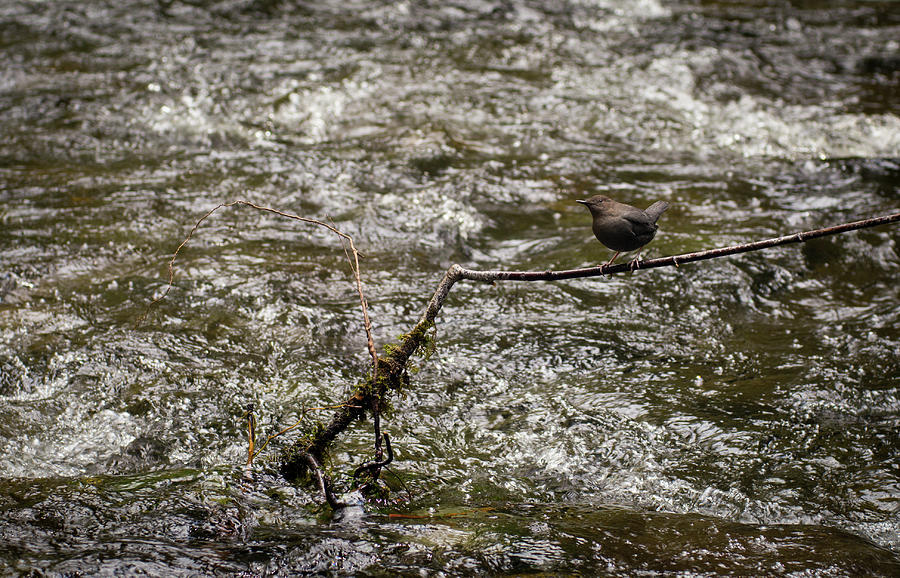 Bird Photograph - Bird On A River by Trance Blackman