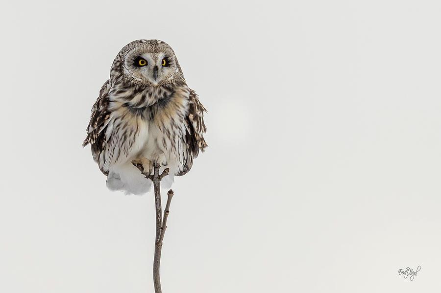 Bird On A Stick Photograph