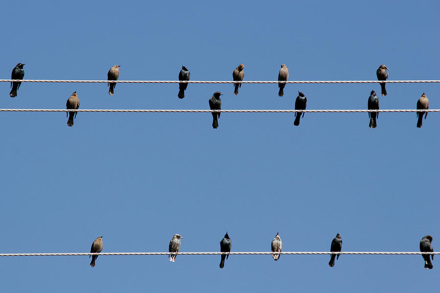 Birds Photograph - Bird On A Wire by Christine Till