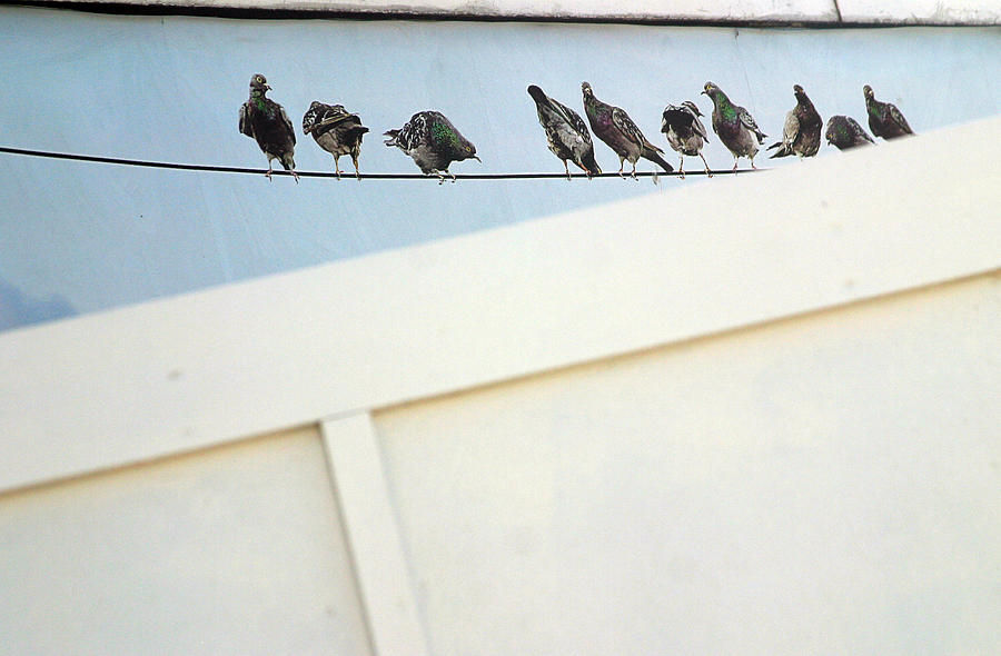 Photographer Photograph - Bird On A Wire by Jez C Self