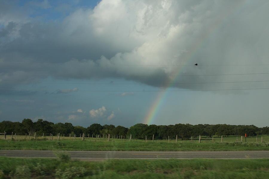 Rainbow Photograph - Bird On A Wire by Jonathan Kotinek