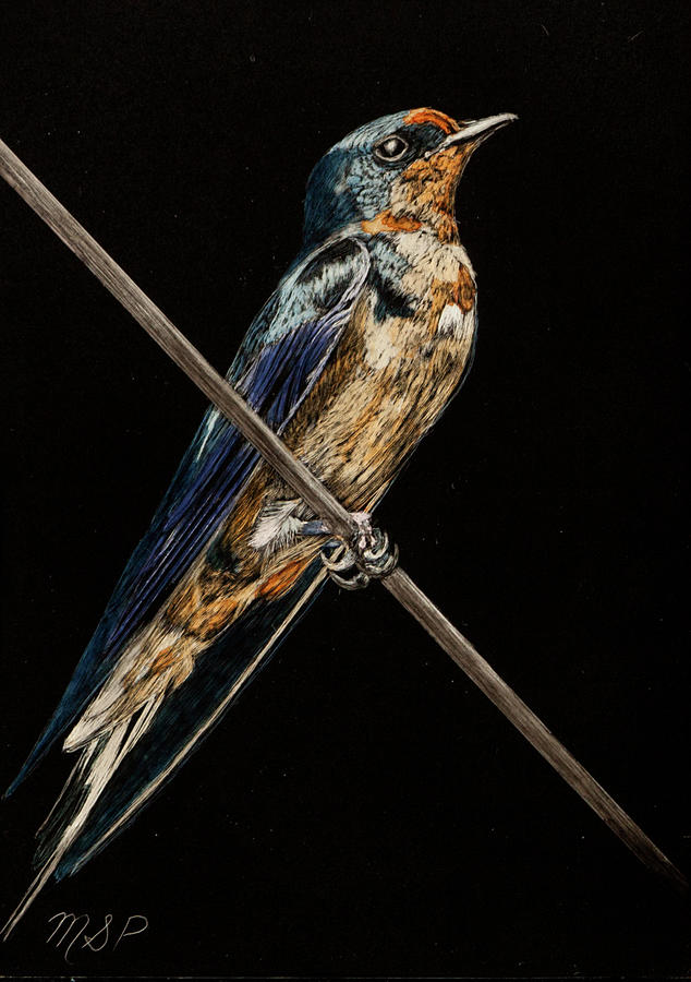 Bird on a Wire by Margaret Sarah Pardy
