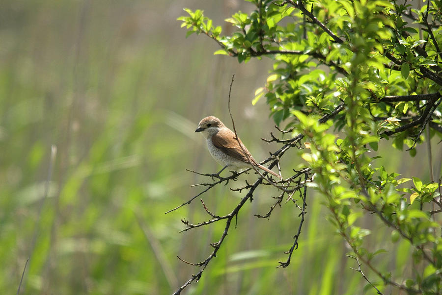 Bird On Branch Photograph