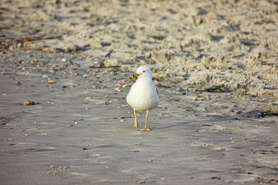 Bird on the Beach by Angel Sharum