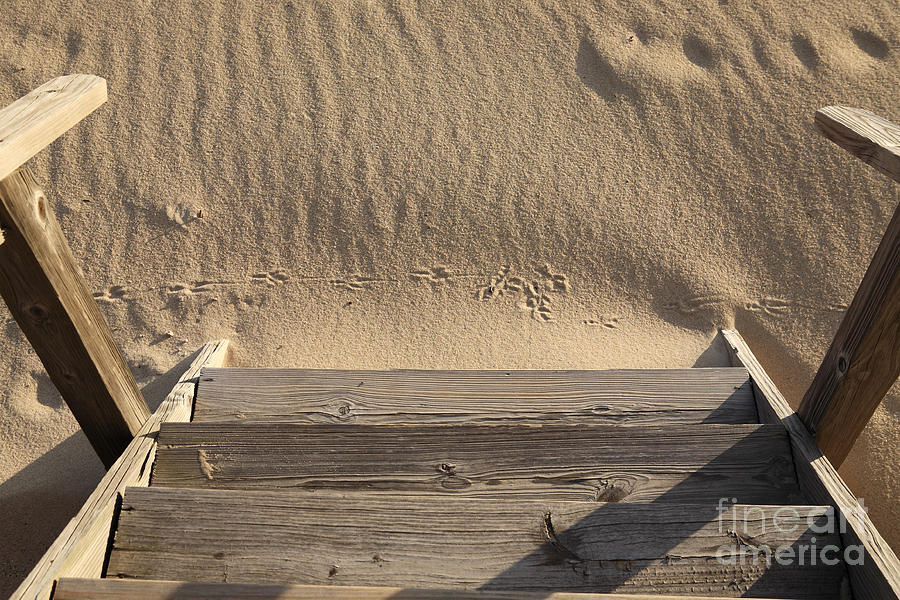 Steps Photograph - Bird Prints In The Sand by Bryan Attewell