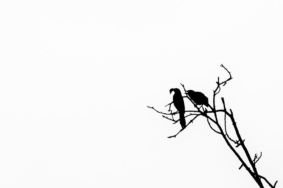 Bird Silhouettes 1 Photograph